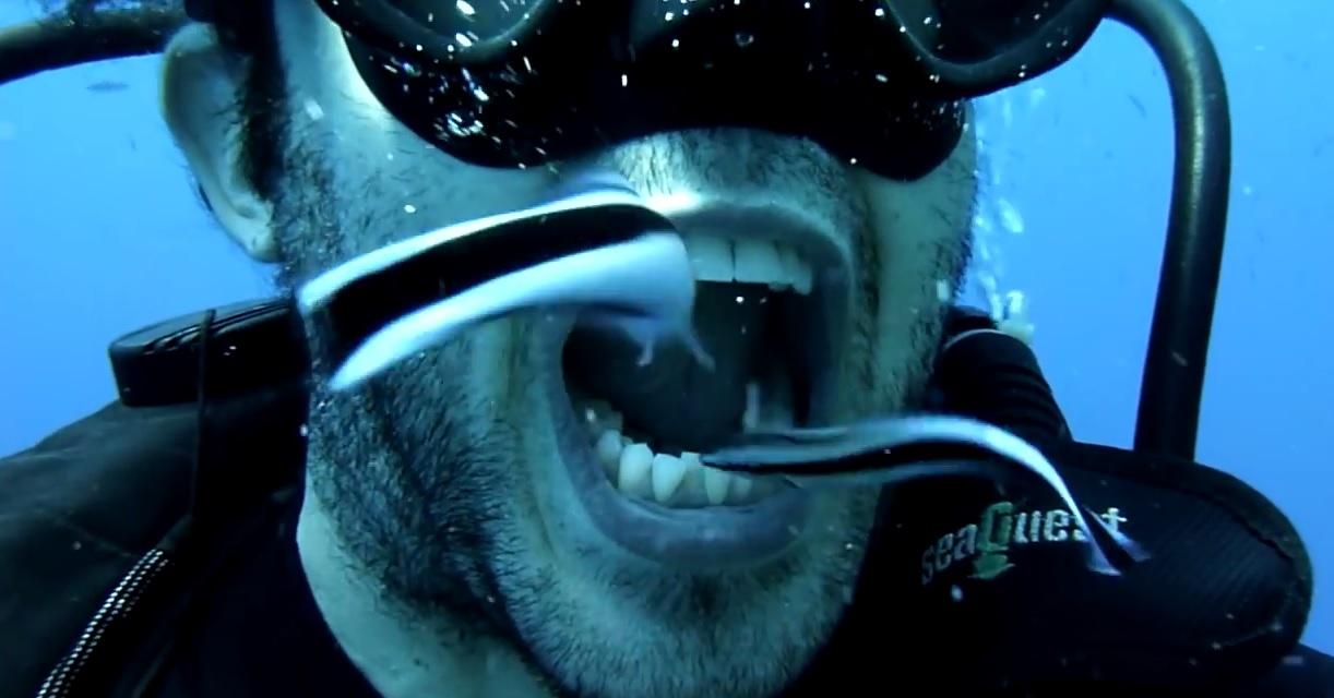 Die Würmer der Name vom Foto