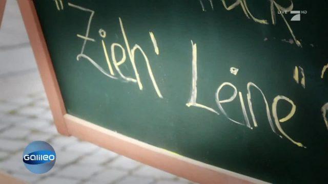 Schleumeier: Zieh Leine!