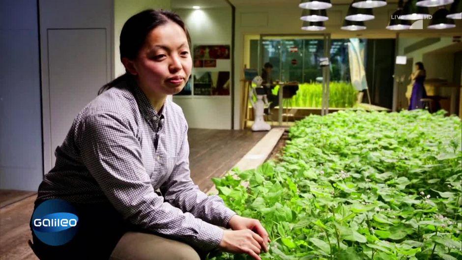 Gemüsegarten im Büro? In Tokio ist das Realität