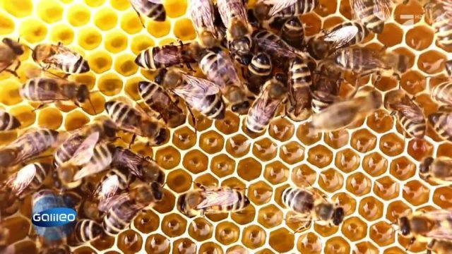 Verkaufsschlager Honig: Die wichtigsten Fakten des süßen Goldes