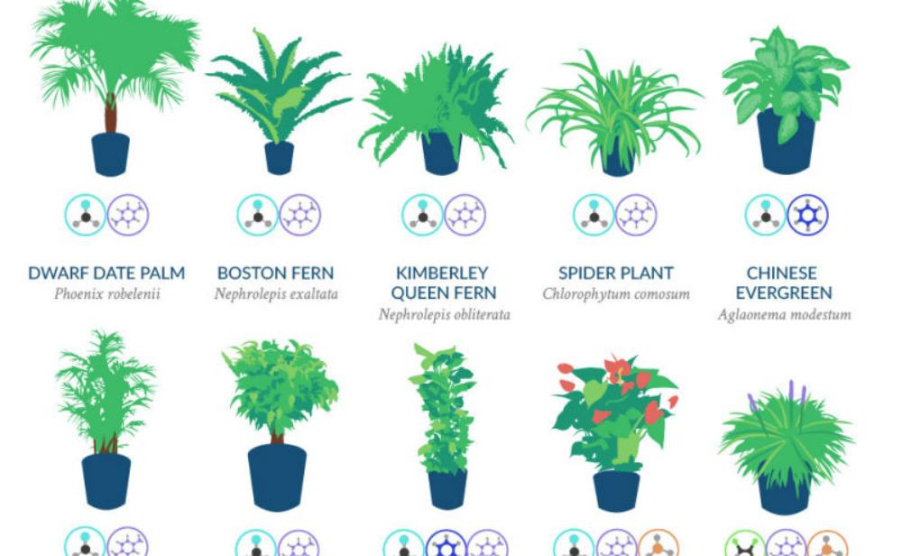 Nasa Empfiehlt Diese Zimmerpflanzen Machen Die Sauberste Luft
