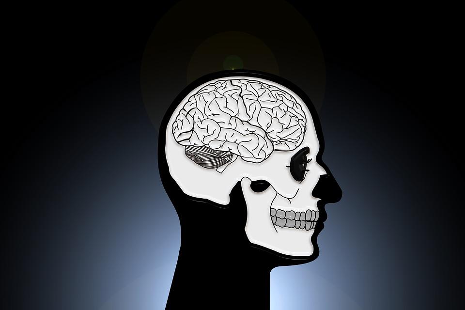 In welchem Alter wird das Gehirn voll ausgewachsen?