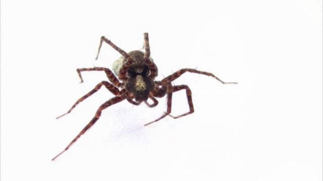 Das passiert wirklich mit einer Spinne, wenn ihr sie einsaugt