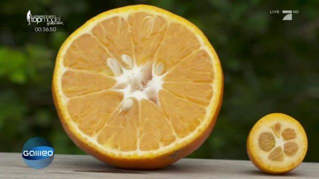 Kumquat: Die Mini-Orange