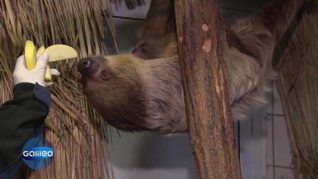 Niedliche Tiere zählen: So geht Inventur im Zoo