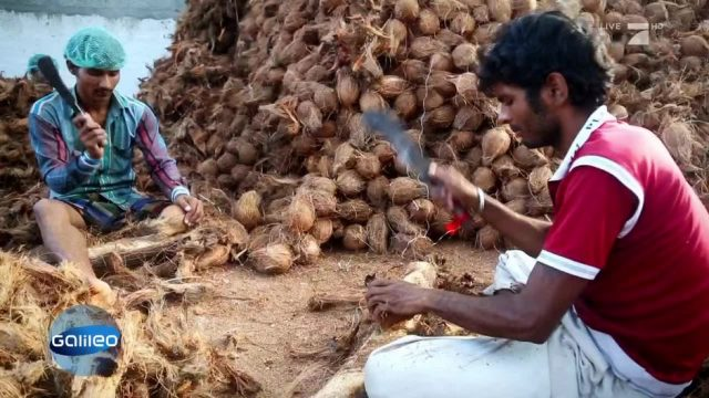 Was kann die Kokosnuss alles?