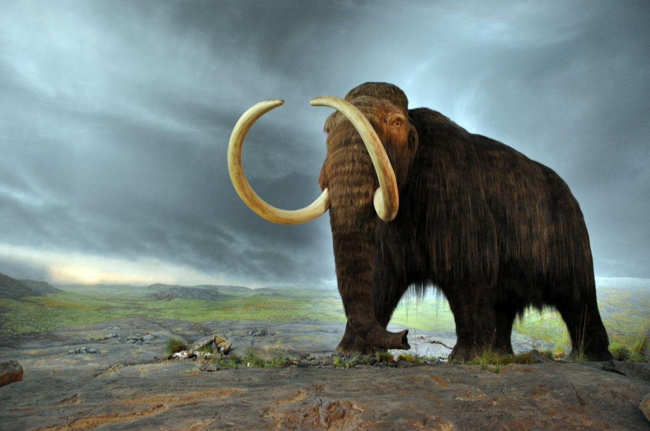 Die Großen unter uns sind Nachkommen der Mammutjäger