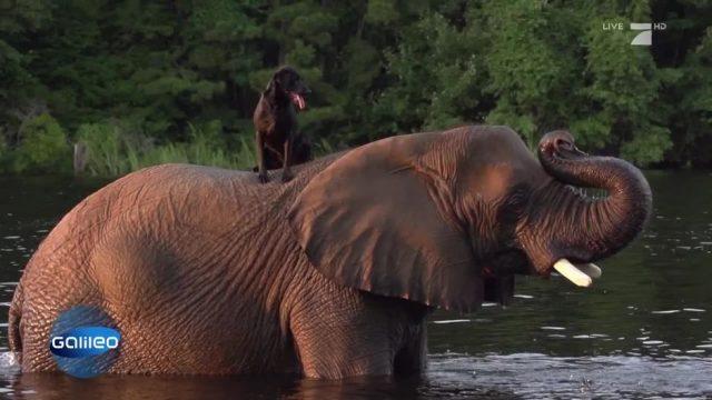 Eine ganz besondere Tierfreundschaft