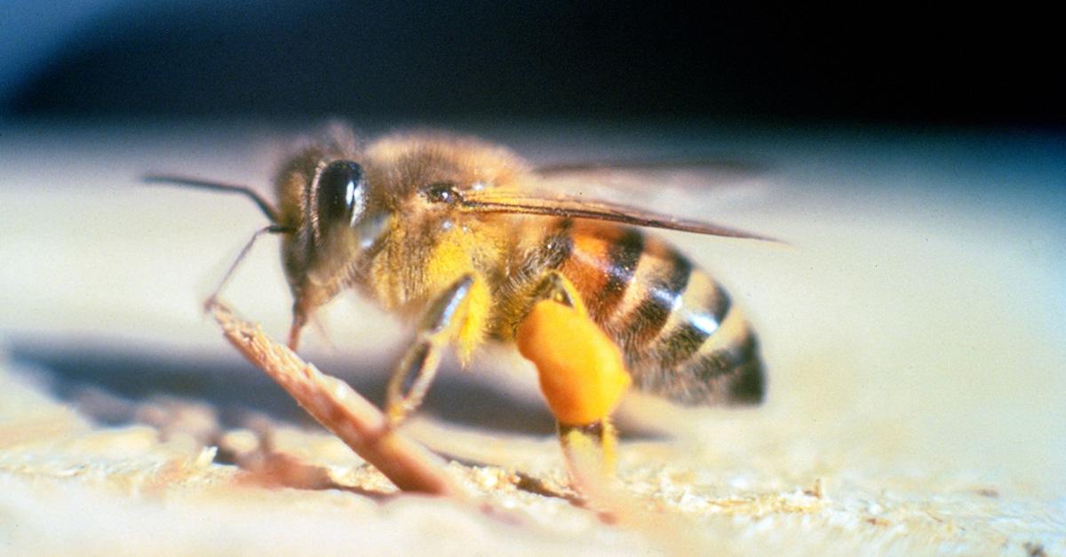 Killer Bienen