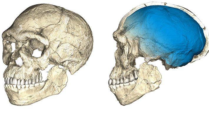 Die ältesten Menschenknochen aller Zeiten wurden entdeckt - und ...