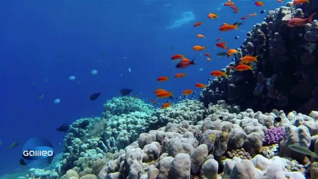Ein Riff aus dem 3D-Drucker zur Rettung der Weltmeere