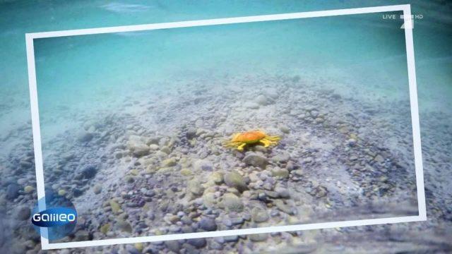 So gelingt euer Unterwasser-Foto auch ohne teure Unterwasser-Schutzhülle