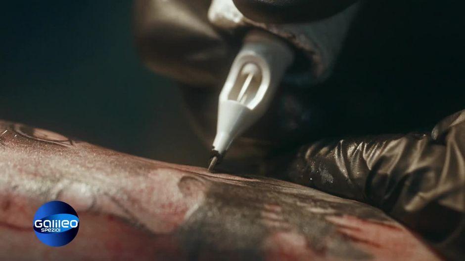 Galileo Spezial: Tattookult weltweit (Preview)