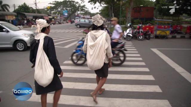 Vom indonesischen Dschungel in die Großstadt