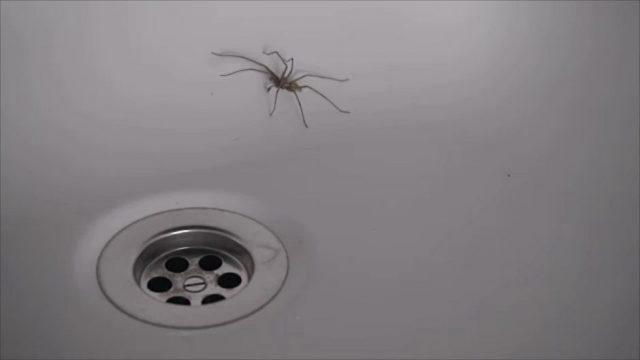 Das passiert wirklich mit einer Spinne, wenn ihr sie die Toilette runterspült