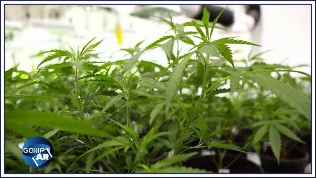 3 vergessene Gründe, wieso Cannabis heute verboten ist