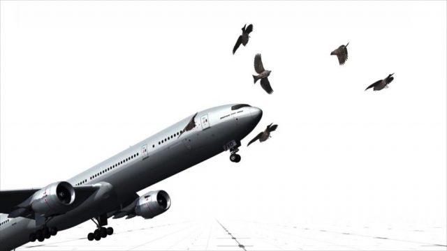 Es passiert häufiger, als man denkt: So gefährlich ist es wirklich, wenn ein Vogel ein Flugzeug trifft