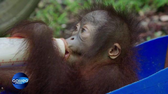 Sonntag: Zickig, bockig - menschlich? Teenies im Tierreich