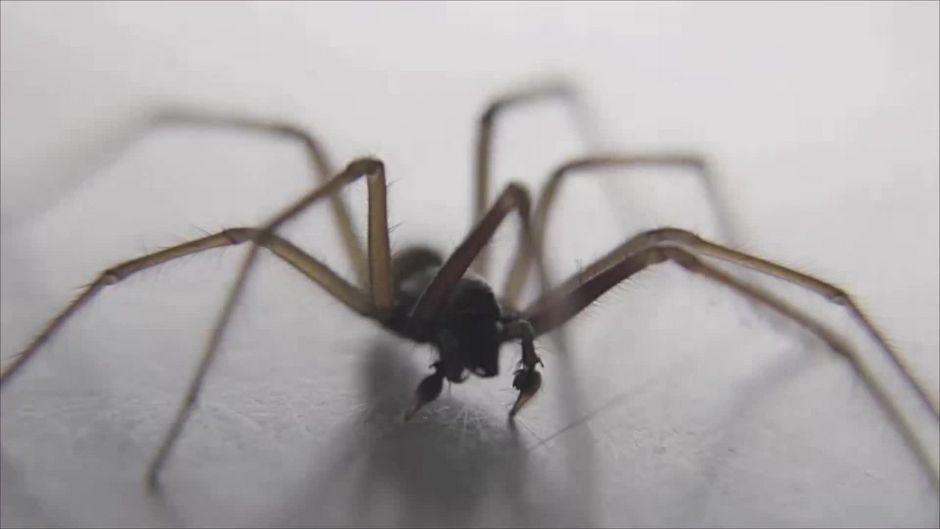 Waaah! Studie behauptet: In diesem Raum leben die meisten Spinnen