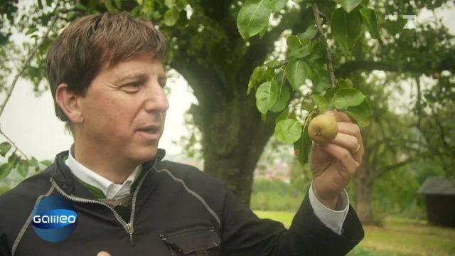 Birnen vs Äpfel: Was ist das bessere Obst?