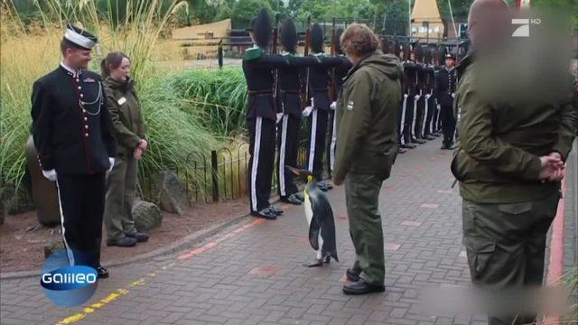 Ein tierischer Brigadegeneral