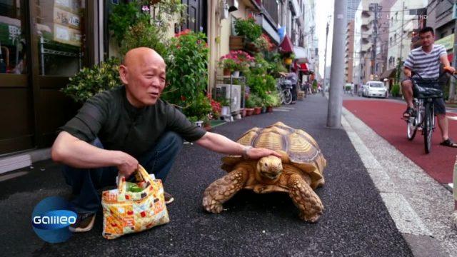 Ein ungewöhnliches Paar: Herrchen und Schildkröte