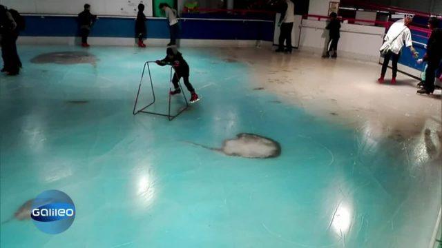 Japan: 5.000 tote Fische in Eisbahn eingefroren