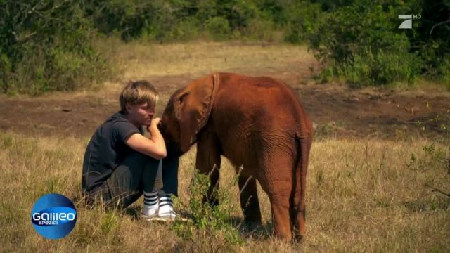 Können Tiere genauso lieben wie wir Menschen?