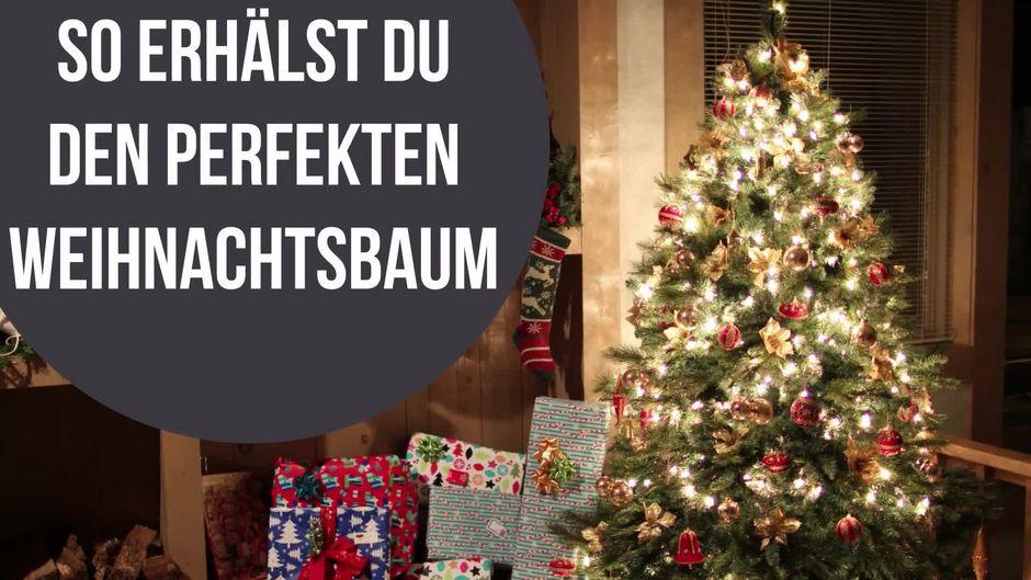 So bleibt dein Weihnachtsbaum länger grün und frisch