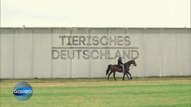 Tierisches Deutschland