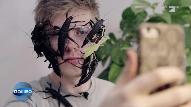 Das große Krabbeln: Er ist ein Insekten-Star im Internet