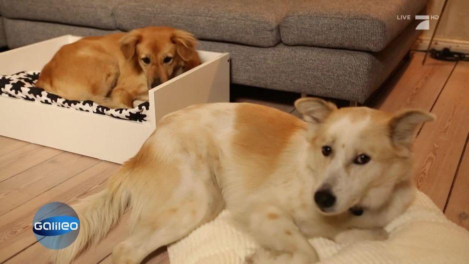 Eröffnet Ein Schwedisches Möbelhaus Nun Einen Shop Für Tiere