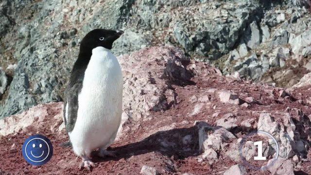 Erfreuliche Botschaft: Wachstum der Pinguin-Population