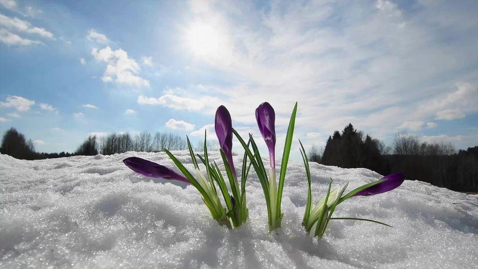 Kälteeinbruch zum Frühlingsanfang: Hier wird es nochmal kalt
