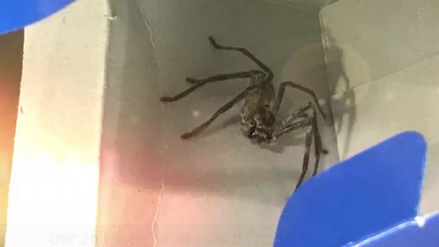 Riesige Spinne im Flugzeug nach München entdeckt