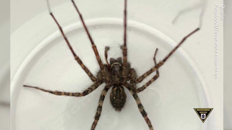 Spinne im Auto: Fahrer wird nach Unfall bewusstlos gefunden