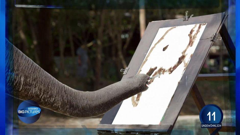 Unerklarliche Begabung Der Malende Elefant