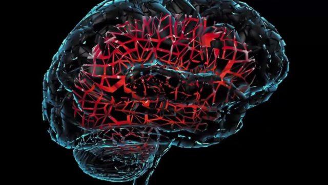 Wissenschaftler züchten menschliche Mini-Gehirne - und die machen sich jetzt selbstständig
