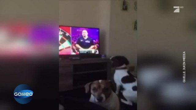 Dieser Hund läuft den Dartpfeilen aus dem Fernseher hinterher