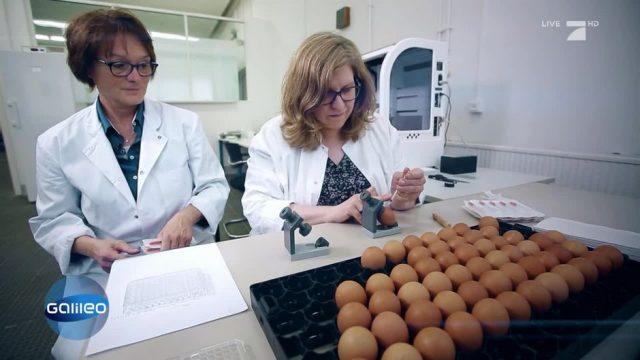Kükenretterin: So löst sie das größte Problem der Eier-Industrie!