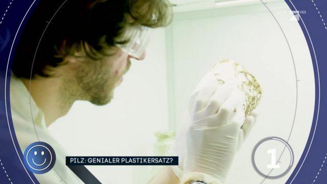Wird dieser Pilz zukünftig Plastik ersetzen?