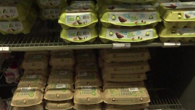 Nach Lebensmittel-Skandal: Erneut Insektengift in 73.000 Eiern in Deutschland gefunden