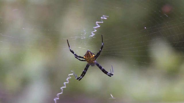 Wissenschaftler erklären: Darum solltest du Spinnen bei dir zuhause niemals töten