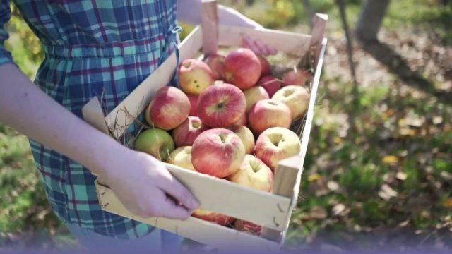Bio-Lebensmittel: Diese Produkte solltest du Bio kaufen, diese nicht