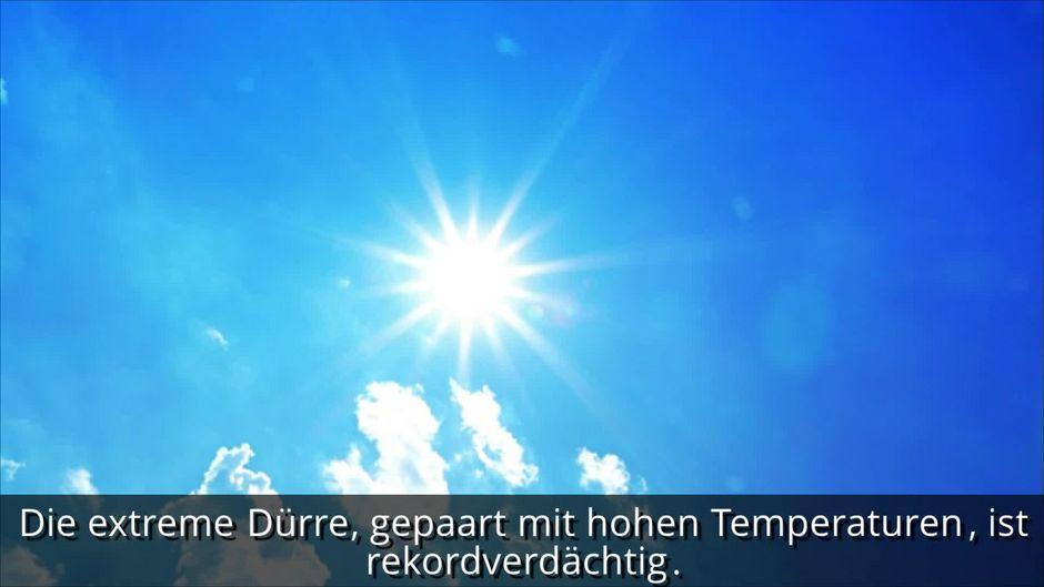 Extreme Hitze-Welle: Laut Wettervorhersage werden es jetzt über 35 Grad