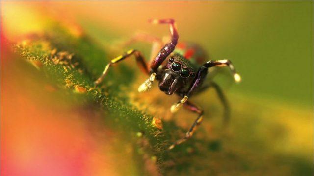 Spinnen können tatsächlich fliegen - und zwar mit einem genialen Trick