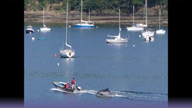 Badeverbot ausgesprochen: Sexuell frustrierter Delfin bedrängt Menschen