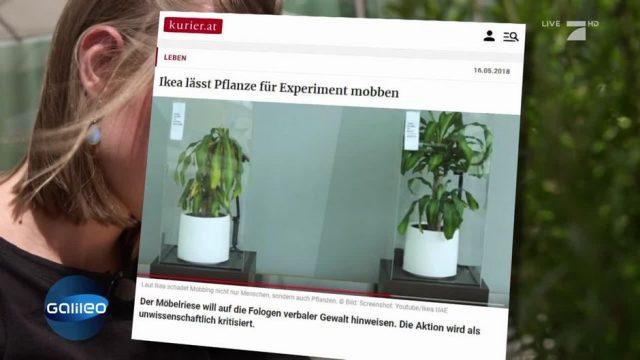 Fake News: Sterben gemobbte Pflanzen wirklich?