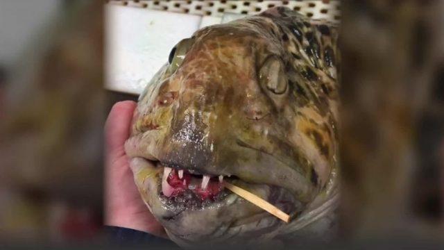Gruselige Bilder! Diese Kreaturen aus der Tiefsee sind nichts für schwache Nerven