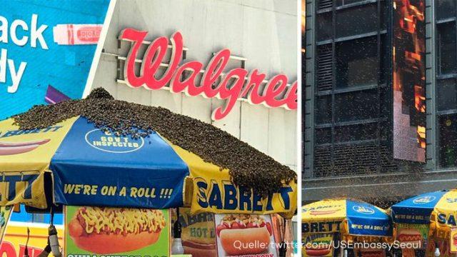Hier stürzen sich 40.000 Bienen auf einen Hotdog-Stand - mitten in New York